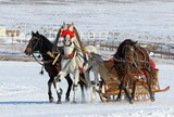The Russian three of horses in sledge