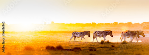 Africa Sunset Landscape - 106656540