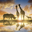 Silhouette of a Rhino with Giraffes and Antelope at sunset