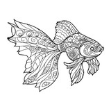 Fototapety Gold fish coloring book for adults vector