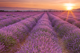 Sunrise over fields of lavender in the Provence, France - 106781970