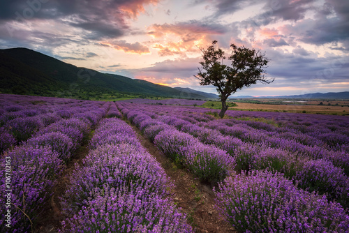 Papiers peints Aubergine Lavender dawn. Stunning landscape with lavender field at sunrise, Bulgaria.