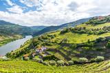 Krajobraz rzeki Douro w Portugalii - winnice