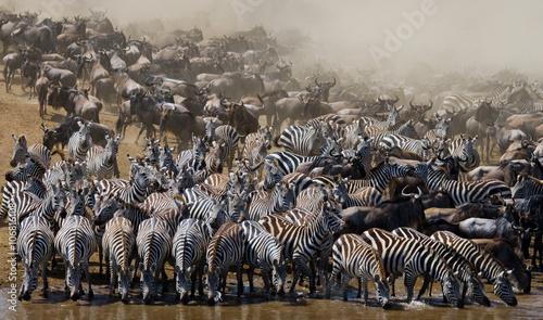 Obraz na Szkle Big herd of wildebeest is about Mara River. Great Migration. Kenya. Tanzania. Masai Mara National Park. An excellent illustration.