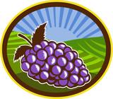 Grapes Vineyard Farm Oval Woodcut