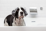 Fototapety Funny Dog Wearing Shower Cap in Tub