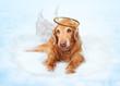 Old Dog Angel on Cloud in Heaven
