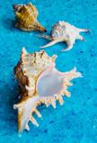 Seashells, closeup. On the crystal blue blurred background.