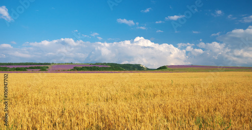 Meadow of wheat in mountain. Nature composition.