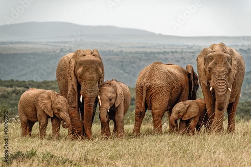 Poster Elephant Family