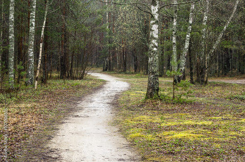 Fototapeta Foggy spring landscape with footpath in the woods