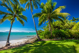 Fototapety Rex Smeal Park in Port Douglas with palm trees and beach