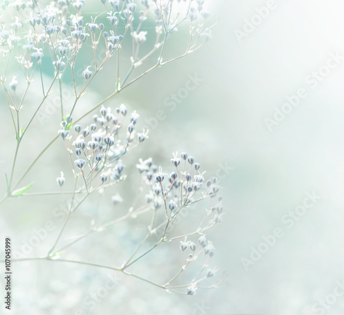 Pastel toned white flowers - 107045999