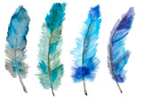Fototapety Watercolor vector feathers