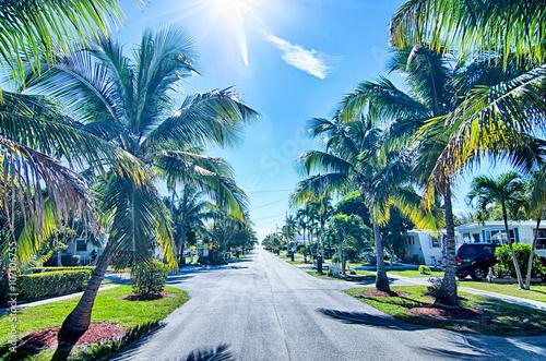 fototapeta na ścianę way to the beach with palm trees in key west florida