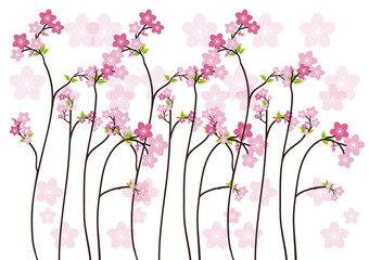 Cherry blossom, Sakura  pink flowers  background.