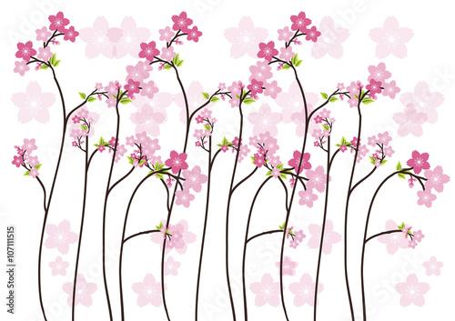 Naklejka Cherry blossom, Sakura pink flowers background.