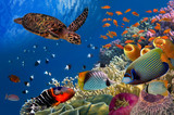 Colorful coral reef with many fishes and sea turtle - 107136779