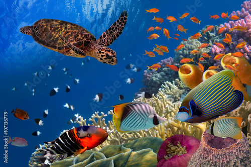 Fototapeta Colorful coral reef with many fishes and sea turtle