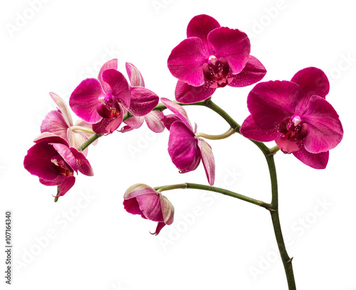 Orchid flowers isolated on white background - 107164340