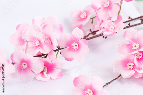 Poster The plastic sakura on white background, isolated