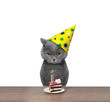 British cat celebrating birthday with piece of cake