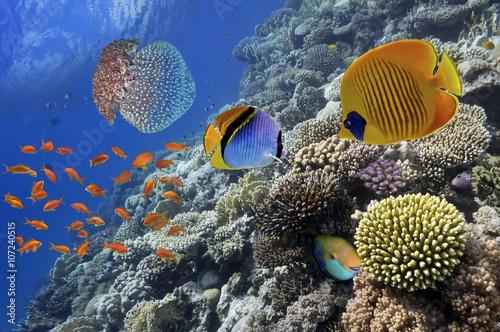 wspanialy-i-piekny-podwodny-swiat-z-koralowcami