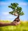 Obrazy na płótnie, fototapety, zdjęcia, fotoobrazy drukowane : hands holding bonsai tree in a countryside