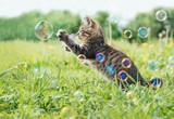 Kociak gra z bąbelkami mydlanymi
