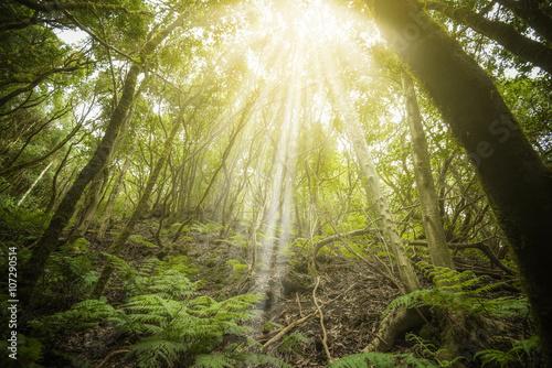 Bosque tropical en las Islas Canarias