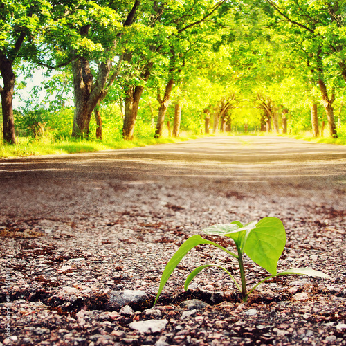 green plant growing from crack in asphalt at summertime Poster