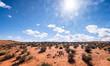 Arizona American desert landscape under a blazing sun with lens flare