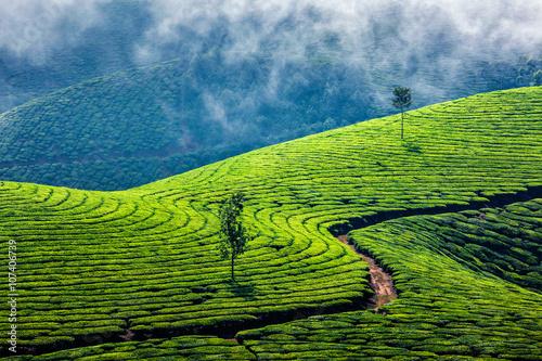 obraz lub plakat Green tea plantations in Munnar, Kerala, India