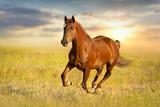 Red horse  run against sunset sky - 107419321