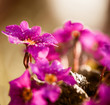 wet violet flowers at abstract background