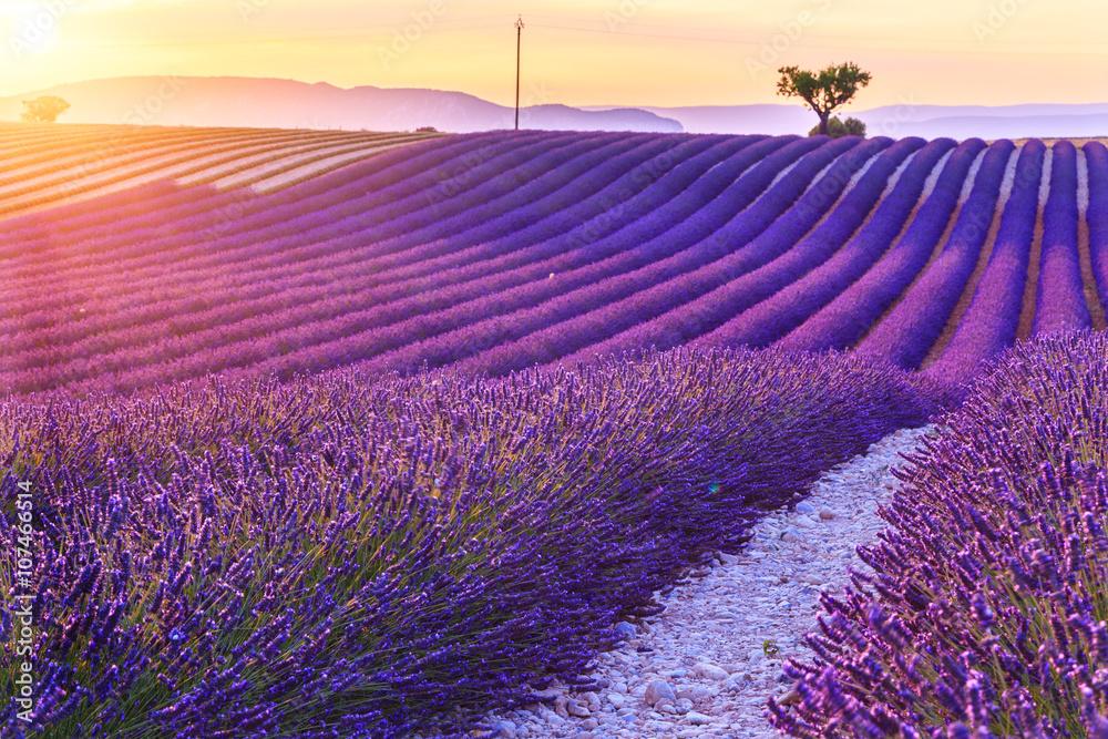 K chenr ckwand aus glas mit foto beautiful sunset lavender field nikkel - Kuchenruckwand lavendel ...