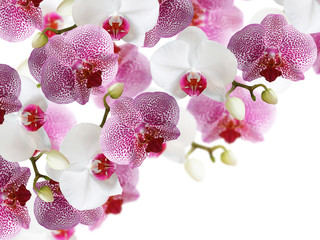Floral background. Orchids