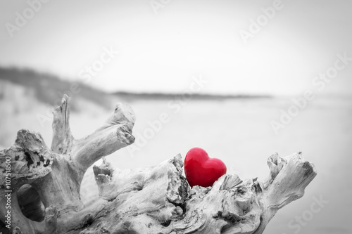 Red heart in a tree trunk on the beach.. Love symbol. Red against black and white