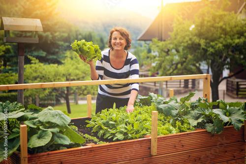 Foto Murales Frau erntet Salat vom eigenen Hochbeet/gardening 17