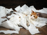 Funny kitten playing with the toilet paper on the floor. Kitten small, fur is white with red. Paper crumpled, torn  - 107534152