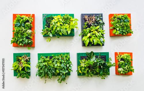 vertical garden Idea in the city | Buy Photos | AP Images | DetailView