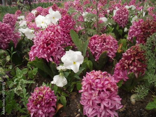 Deurstickers Crimson pembe çiçekler 4