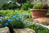 fiori azzurri in giardino