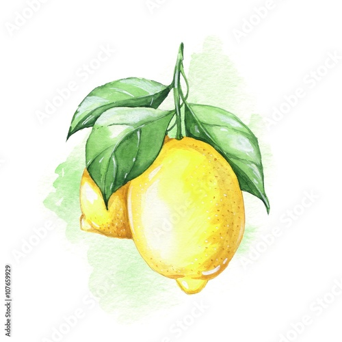Lemons. Watercolor illustration.  - 107659929