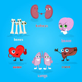 Vital Anatomical Organs Cartoon Characters Set Collection