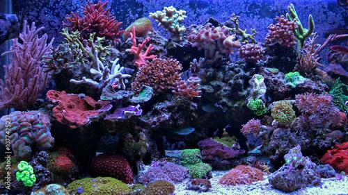 niesamowity-moment-akwarium-coral-reef