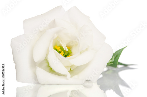 Staande foto Roses Beautiful white flower with leafs on white background. Eustoma