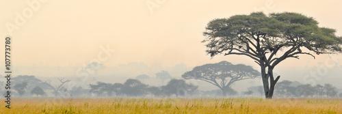 Beautiful scene of Serengeti National park