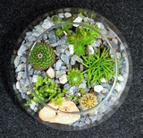 Table indoor decorative miniature garden in clear glass with cactuses and succulents. Decorative glass vase with succulent and cactus plants. Glass interior terrarium with succulents and cactuses.