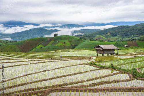 Fotobehang Beautiful morning scenic view with fog and cottage at rice terra